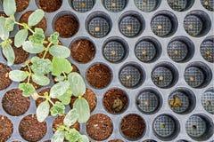 Jeune plante plantée Photographie stock