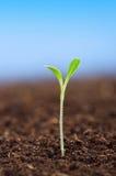 Jeune plante verte Photo stock