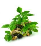 Jeune plante verte d'isolement Photographie stock libre de droits