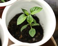 Élevage vert de jeune plante Photo libre de droits