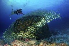 Jeune plongeur autonome étonnant avec des poissons sous-marins Image libre de droits