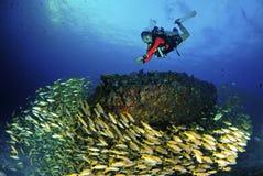 Jeune plongeur autonome étonnant avec des poissons sous-marins images stock