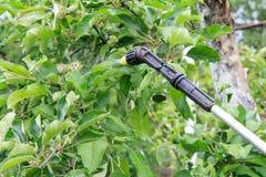 Jeune pommier protecteur de la maladie fongique ou vermine avec p photos stock
