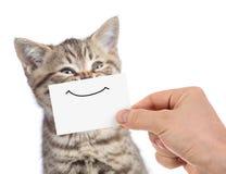 Jeune portrait heureux drôle de chat avec le sourire sur le carton d'isolement sur le blanc photographie stock