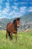 Jeune position de cheval de châtaigne Photographie stock libre de droits