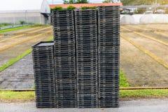 Jeune pousse de riz dans la boîte prête à l'élevage Image libre de droits