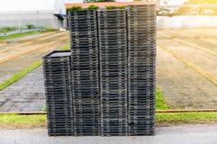 Jeune pousse de riz dans la boîte prête à l'élevage Image stock