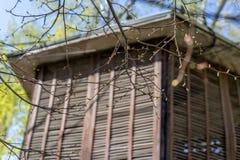 Jeune pousse fraîche s'élevant dans le printemps au fond de maison Photographie stock