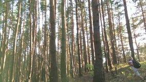 Jeune randonneur féminin dans le mouvement lent de forêt banque de vidéos