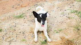 Jeune regard de chien Photos stock
