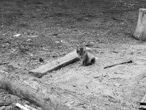 Jeune renard polaire Photographie stock libre de droits