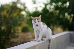 Jeune séance de chat Photos stock