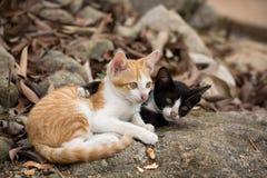 Jeune se tenir de chatons Photos libres de droits