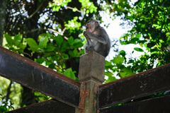 Jeune singe se reposant sur le signe au milieu des jungles photographie stock