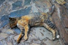 Jeune sommeil de chat sur le plancher en pierre Photo stock