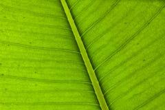 Jeune texture verte de lame Image stock