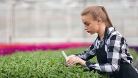 Jeune travailleur agricole féminin de soin versant les usines organiques du plan rapproché moyen de tube de verre clips vidéos