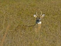 Jeune type dans l'herbe grande Photo stock
