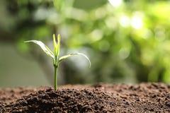Jeune usine dans le sol fertile sur le fond brouillé Temps de jardinage photo stock
