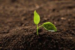 Jeune usine dans le sol fertile Temps de jardinage images stock