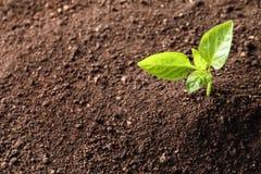 Jeune usine dans le sol fertile, vue supérieure Temps de jardinage images stock
