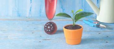 Jeune usine et outils de jardinage Photographie stock libre de droits