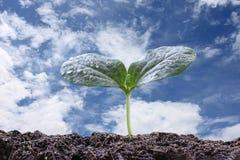 jeune usine ou jeune plante verte sur le sol dans le potager Photographie stock
