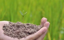 Jeune usine s'élevant sur l'idée de concept de la terre verte images stock