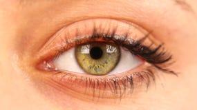 Jeune vert femelle d'oeil, détail Images stock