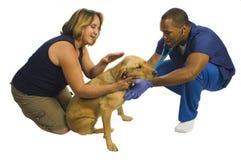 Jeune vétérinaire d'Afro-américain Photos stock