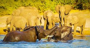 Jeunes éléphants jouant dans l'eau image libre de droits