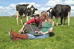 Jeunes ajouter à l'ordinateur portatif entre les vaches Image libre de droits