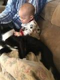 Jeunes amours de garçon sur le jeune chat Image stock