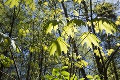Jeunes arbres croissants au-dessus de ciel bleu Images stock