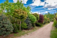 Jeunes arbres d'érables, de pin et de châtaigne photos stock