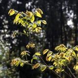 Jeunes arbres dans la campagne dans la porcelaine Images stock