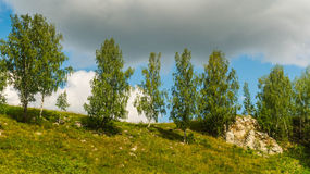 Jeunes bouleaux au dessus de colline Photographie stock libre de droits
