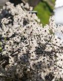 Jeunes bourgeon floraux au printemps dans le rose, le jaune et le blanc au printemps Photographie stock libre de droits