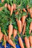 Jeunes carottes fraîches avec des feuilles sur le marché d'agriculteurs images stock