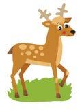 Jeunes cerfs communs avec des klaxons Illustration de vecteur Images stock
