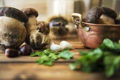 Jeunes champignons de couche de boletus Images stock