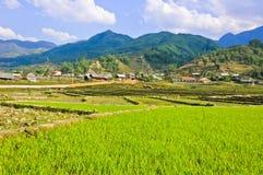 Jeunes collectes de riz en vallée photos libres de droits
