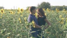 Jeunes couples affectueux en nature en été sur un fond des tournesols banque de vidéos