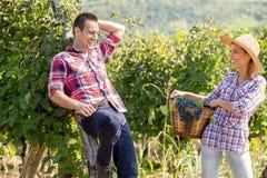 Jeunes couples appréciant dans le vignoble Photos stock