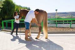 Jeunes couples attrayants toilettant un cheval femelle brun Images libres de droits