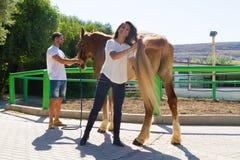 Jeunes couples attrayants toilettant un cheval femelle brun Image libre de droits