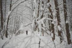 Jeunes couples dans l'amour embrassant dans la forêt froide Image stock