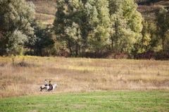 Jeunes couples dans l'amour montant un cheval Images stock
