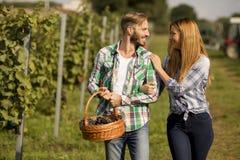 Jeunes couples dans le vignoble photos stock