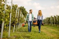 Jeunes couples dans le vignoble Image libre de droits
